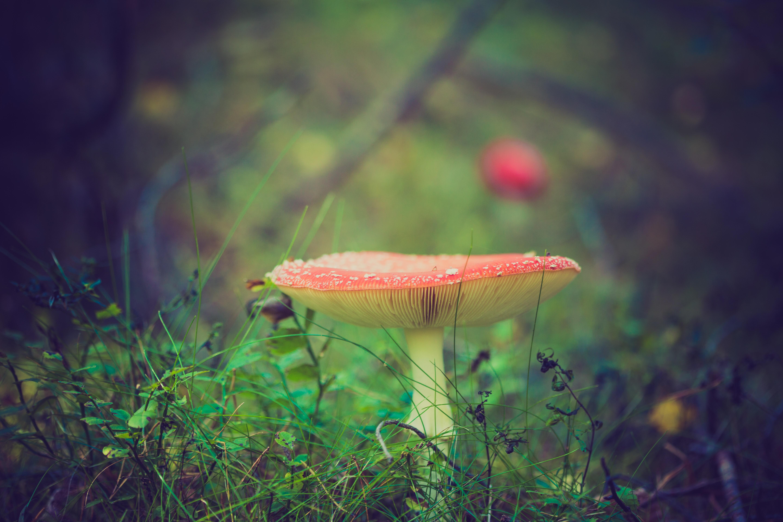 mushroomjpeg