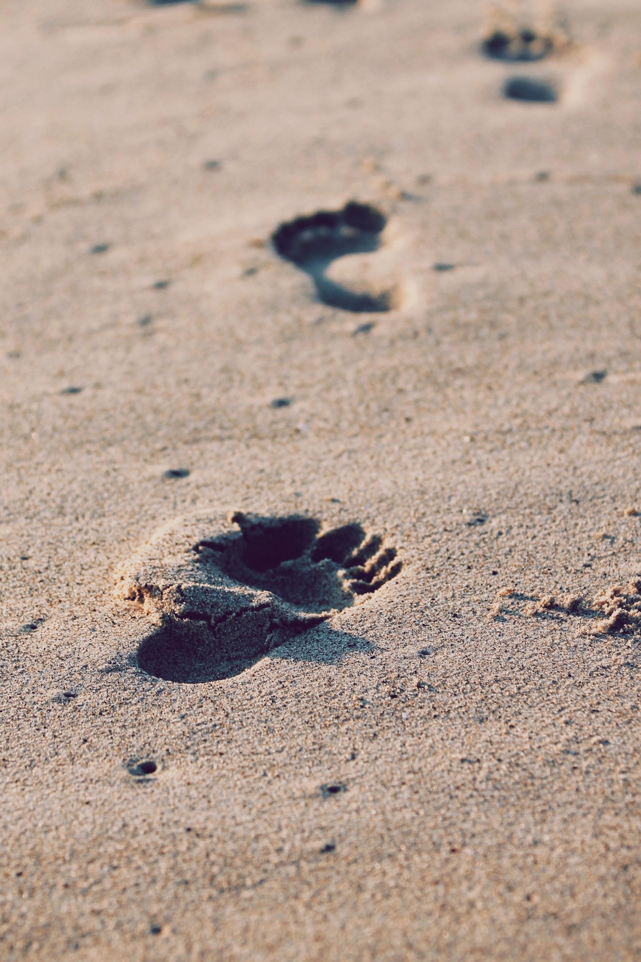 Path of Thy Feet